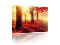 Canvas Forest in autumn sun
